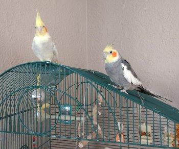 Jasper & Petey